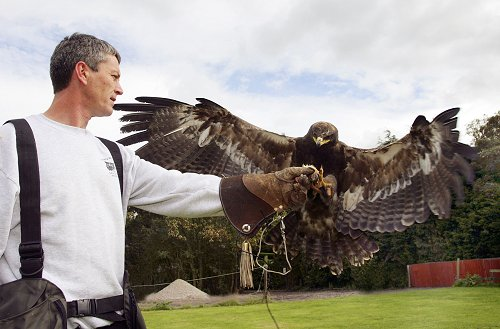 Ian and Albert the Steppe Eagle