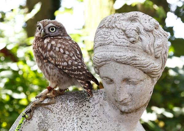 Owl on statue