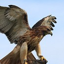 Eagle On Hand
