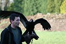 Andy with our Turkey Vulture