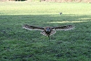 Knowley In Flight