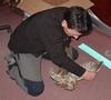 Owl Examination