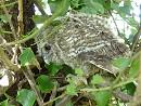 Owls Well