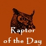 Raptor Of The Day