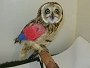 View Help pay the owl's ferryman