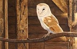 David Miller - Wildlife Artist