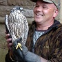 View Church Plunge Falcons Saved From Predators