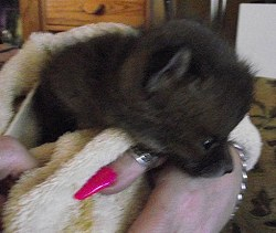 Todd Tokalu Rescue Fox Cub