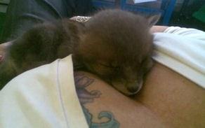 Rescue Fox Cub
